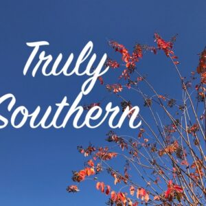 Blue sky behind tree with red leaves and truly southern in white